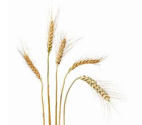 El consumo moderado de cereales integrales ayuda a mantener una buen piel en verano