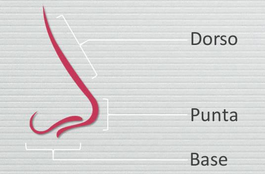 Rinostep corrige problemas estéticos de la nariz localizados en la punta, el dorso y la base nasales